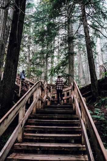 Canada British Columbia, Canada Tree Staircase Forest Nature Steps And Staircases Outdoors Wood - Material WoodLand