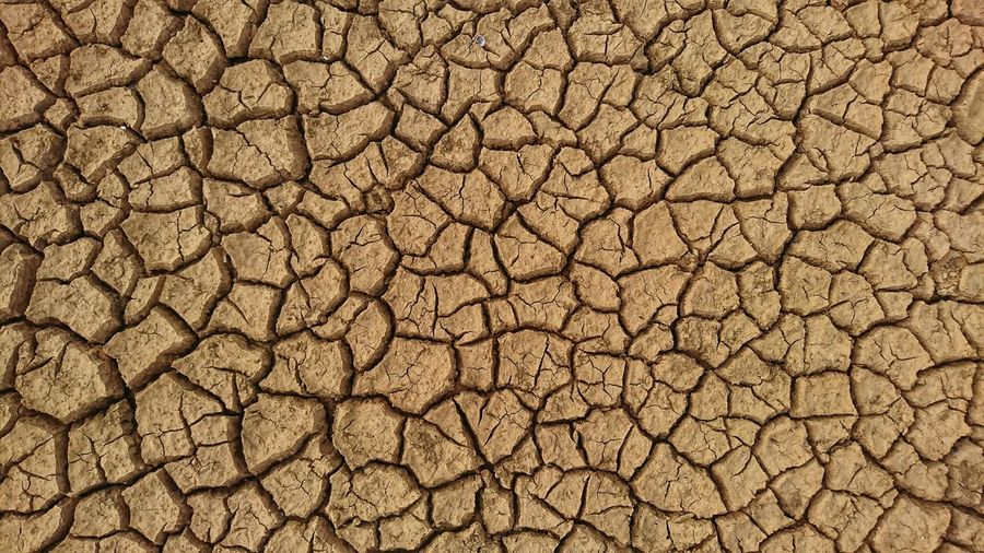 Pattern of arid land background