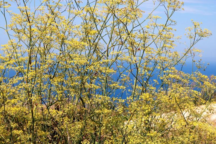 Beauty In Nature Day Flowering Plant Nature No People Outdoors Plant Scenics - Nature Sky Sunlight Tree Yellow