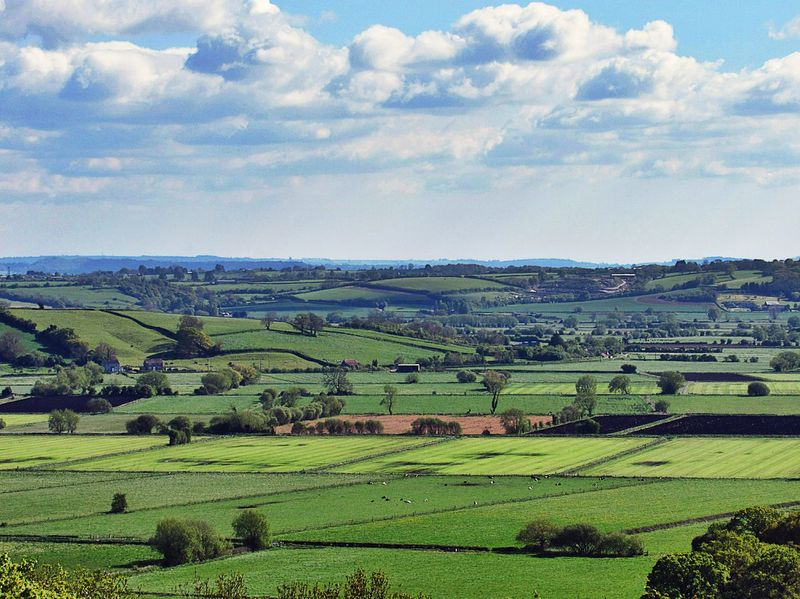 Agriculture Rural Scene Field Farm Landscape Nature Beauty In Nature Growth Outdoors Green Color No People Scenics Crop  Sky Somerset Levels Uk
