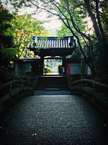 Temple Gate Bridge Trees