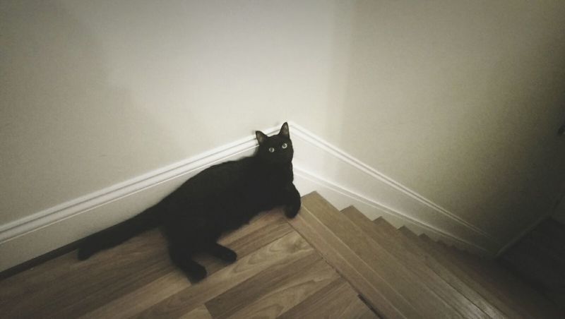 Mojo, the guard cat BLackCat Cats Cute Cats Stairs Stairways Lowsaturation Angles Hanging Out