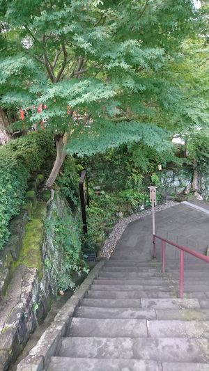 Steps Steps And Staircases Plant Green Color Tree Railing Stairs Beauty In Nature
