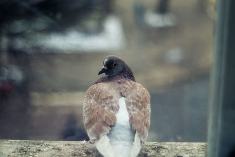 One Animal Bird Animal Wildlife Animals In The Wild Vertebrate Day Focus On Foreground Perching No People Close-up Nature Outdoors Looking Looking Away Beak Pigeon