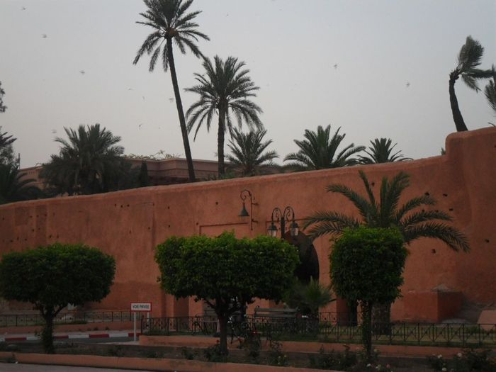 Trowback Holidays Marrakech Ramparts Palm Trees