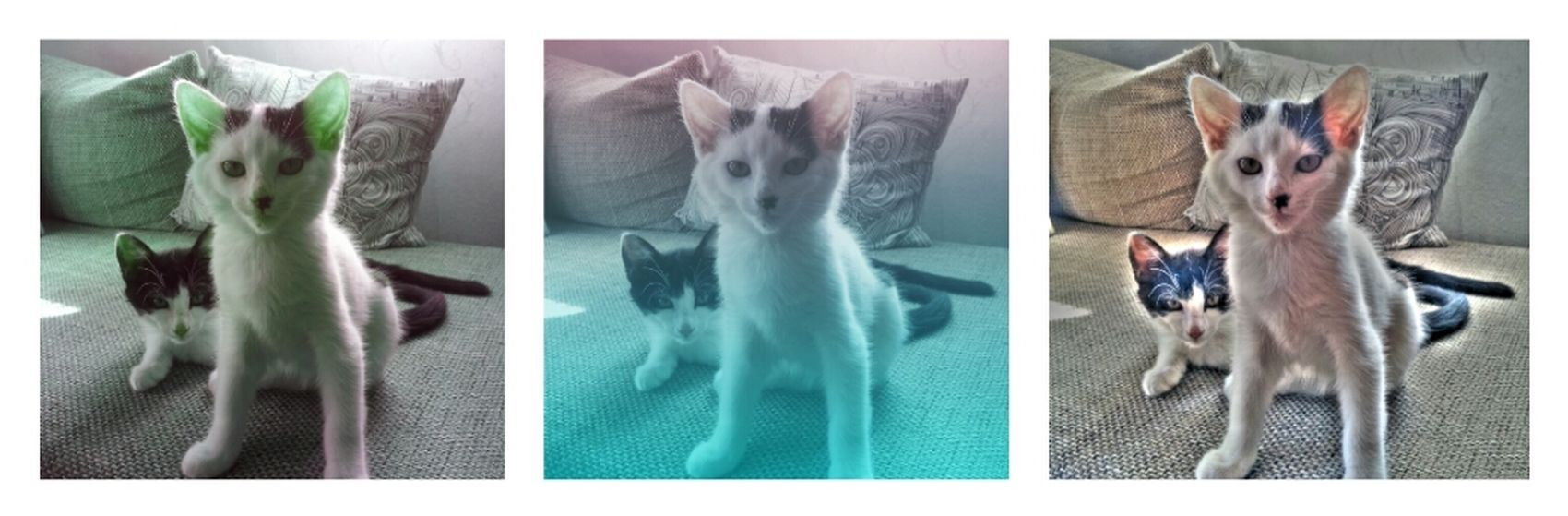 i just played with some effects ;) Daisy& Fluffy <3 Cats Babycats Cute Cats