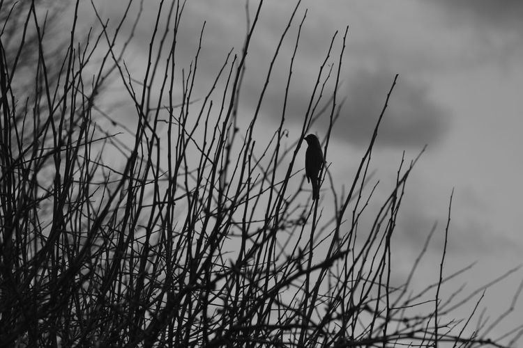 Close-up of bird perching on grass against sky