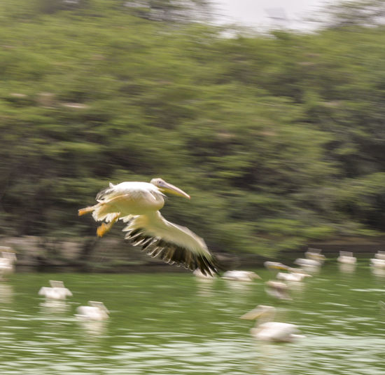 Bird flying over the water