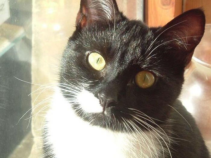 Animal Head  Cat Domestic Cat Feline Looking At Camera Neko Nofilter Pets