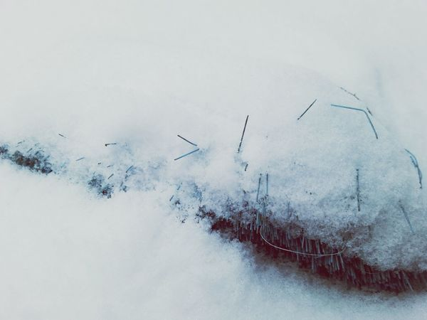 Winter White By CanvasPop PhotoArt By Kitty Fischer Winter_collection Winter Time Cold Days Details Object Photography Outdoors Photograpghy  Frommypointofview Lonely Objects Found Detailphotography