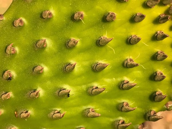Plant Cactus Nature Full Frame Macro Nature No People Beauty In Nature Green