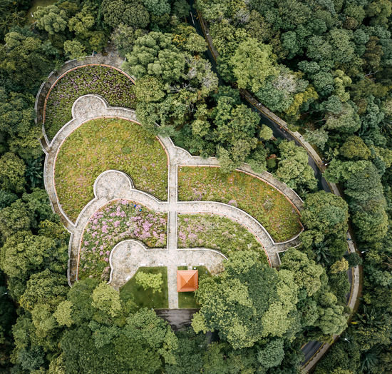 High angle view of plants and trees growing in forest