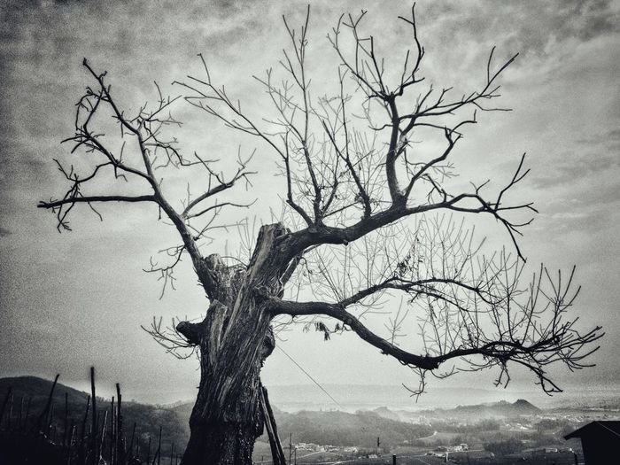 Tree Bare Tree Branch Nature No People Outdoors Sky Day Beauty In Nature Single Tree Italy Landscape Dramatic Sky Proseccohills