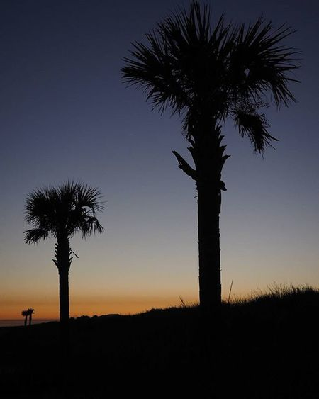 Throwback to my last trip to New Orleans, when I made an evening road trip to the Gulf isles. Latergram Getolympus Olympusomdem1 Omdem1 Zuikodigital Nature Palm Trees Sunset Silhouette Louisiana Gulfcoast