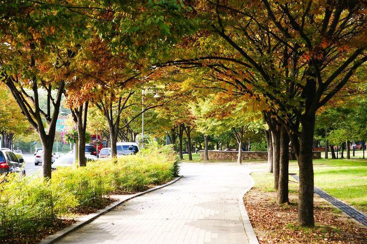 Autumn Park On The Road A700