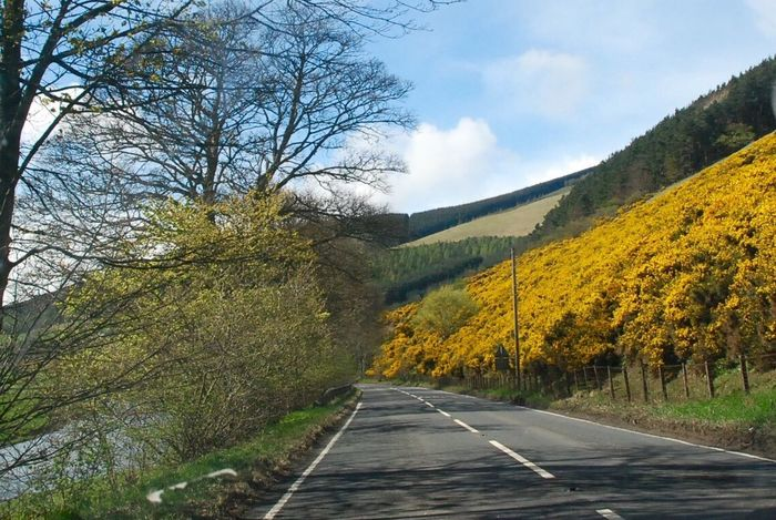 Selkirk Scottish Borders Tree Nature Road Tranquility Tranquil Scene Scenics Mountain Beauty In Nature Sky Outdoors No People The Way Forward Day Landscape Autumn Cloud - Sky Mountain Range Bare Tree Winding Road