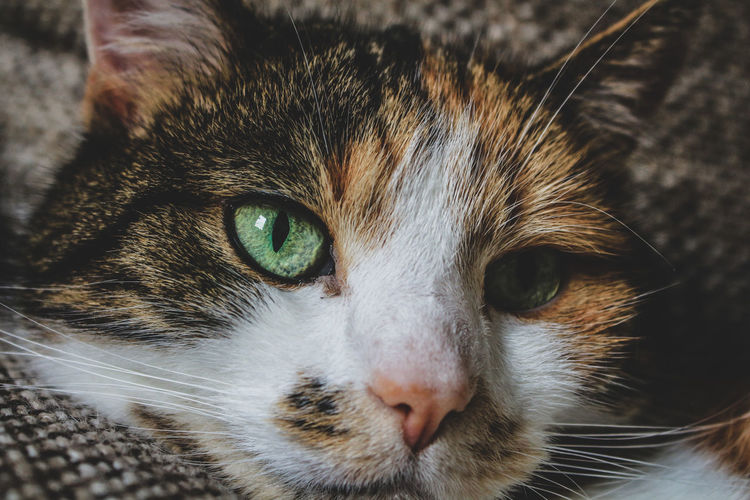 Katze Zuhause
