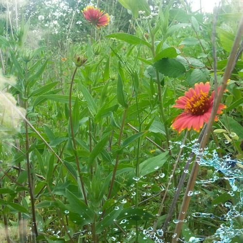 Where The Wild Things Are Texas Landscape Wildflowers Follow Me Nature's Art Texas Rocks Springntexas