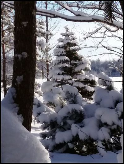 HAPPY HOLIDAYS FRIENDS 🎅 Pic of yard Roy Lake MN taken this morning ..pic taken by Kirk Snow Winter Cold Temperature Tree Nature Beauty In Nature Christmas