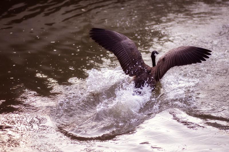 Splashing Bird