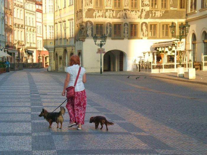 2012 Adult Animal Themes Architecture Building Exterior Built Structure City Czech Republic Day Dog Domestic Animals Full Length Leisure Activity Lifestyles Mammal One Animal One Person Outdoors People Pets Prague Prague Czech Republic Real People Street Walking The Traveler - 2018 EyeEm Awards