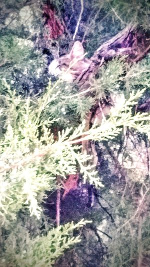Sleeping Cat Hidden Kitty Safe And Sound up a tree Takin Photos ...see My Pic 2016