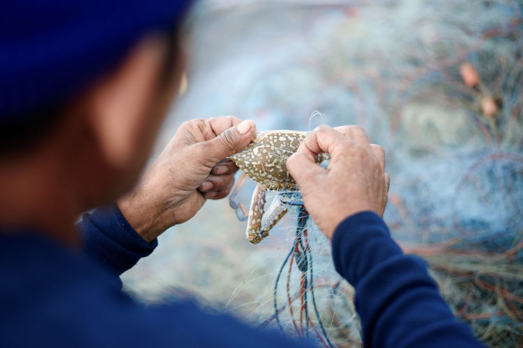 Midsection Of Fisherman Removing Crab From Fishing Net