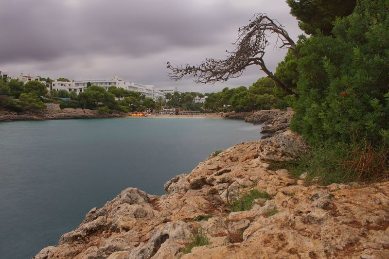 Mallorca Vacations Cala D'or Water Tree Plant Beauty In Nature Sky Nature Scenics - Nature Sea Tranquility Cloud - Sky Tranquil Scene Day No People Beach Land Growth Outdoors Rock