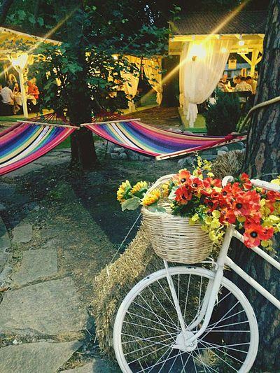 Yummy Nastarovje Enjoying Life Hello World Open Edit Sofia Bulgaria Travelling Uzo Great Atmosphere