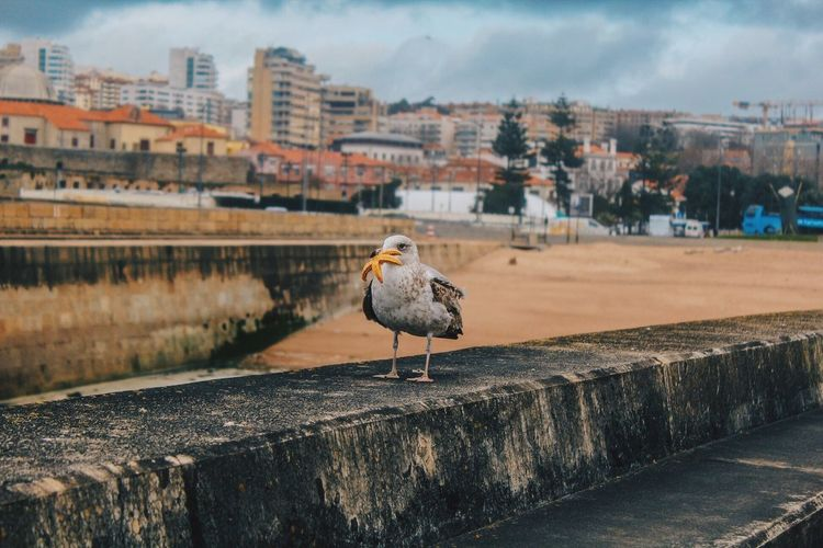 Seagull perching on retaining wall against city