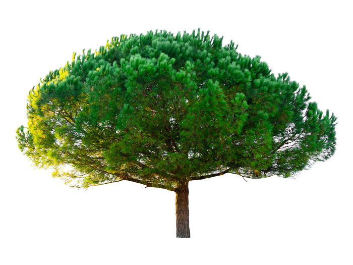Digital composite image of tree against white background