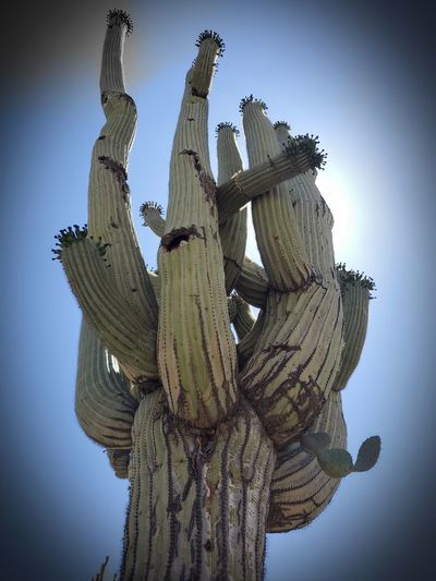 Low angle view of cactus against clear sky