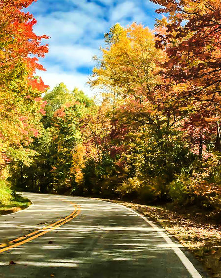 Trees Autumn Nature Autumn Colors Autumn Leaves Scenics Seasons Change Trees Of Eyeem Multi Colored Earth Tones Road Side On The Road Fall Leaf Fall Color Beautiful Nature Trees Collection Beauty In Nature Relaxation Outdoors Change Landscape
