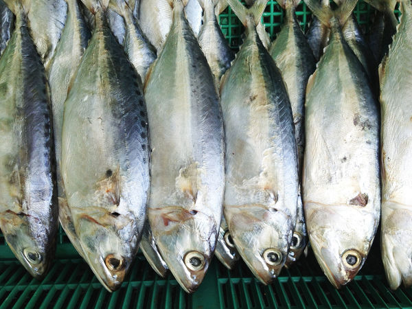 Mackerel fish in local market, Thailand Market Close-up Day Fish Fish Market Food Food And Drink Freshness Healthy Eating High Angle View Indoors  Mackerel Mackerel Fish Market No People Raw Food Retail  Seafood