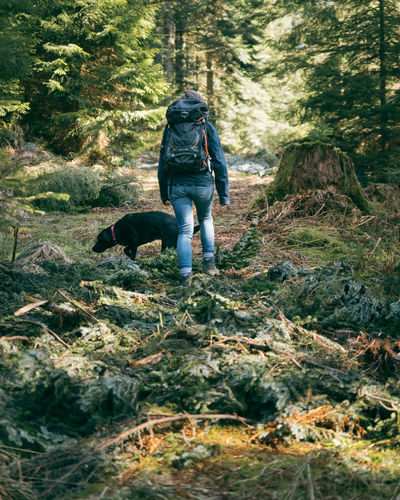 Rear view of dog walking in forest