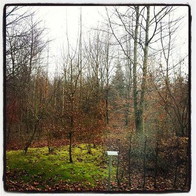 Ich mach mich jetzt auf an den Chiemsee Winter2014 Ichgradso Oberbayern travel ontour unterwegs projectlife letsgo