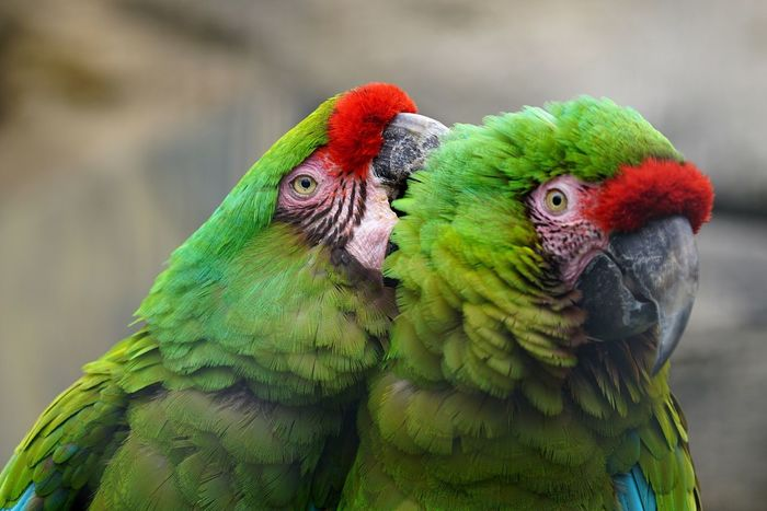 Parrot Bird Macaw Focus On Foreground Animals In The Wild Multi Colored Nature Day Animal Themes Animal Wildlife Close-up Rainbow Lorikeet Outdoors No People Gold And Blue Macaw Animals Pet Portraits