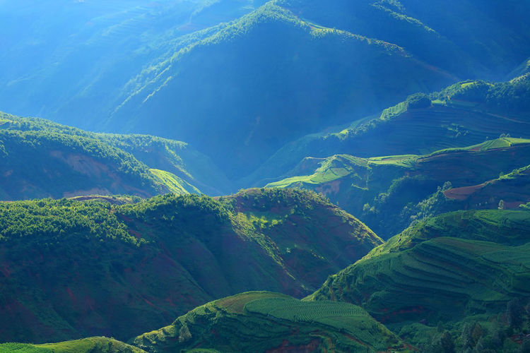 Beautiful landscape of mountain range with beam light in morning at Hongtudi in Dongchuan, Yunnan, Kunming of China Scenics - Nature Environment Beauty In Nature Green Color Mountain Tranquil Scene Tranquility Land No People Landscape Nature Day Idyllic Non-urban Scene Plant Lush Foliage Full Frame Water Foliage Aerial View Outdoors Mountain Peak Rainforest China