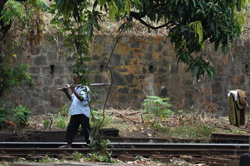 Day Green Color Kandy Railway Station Lush Foliage Outdoors Plant Railway Worker Sri Lanka Tree