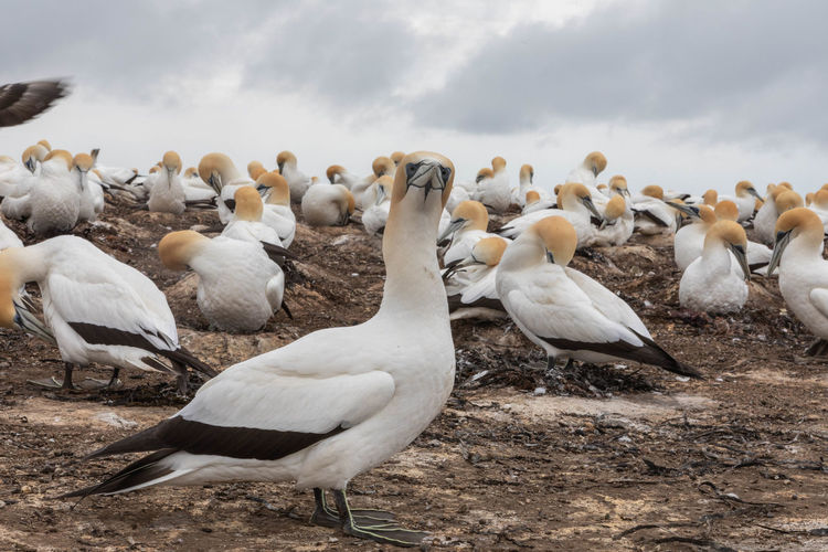 Flock of birds in the field