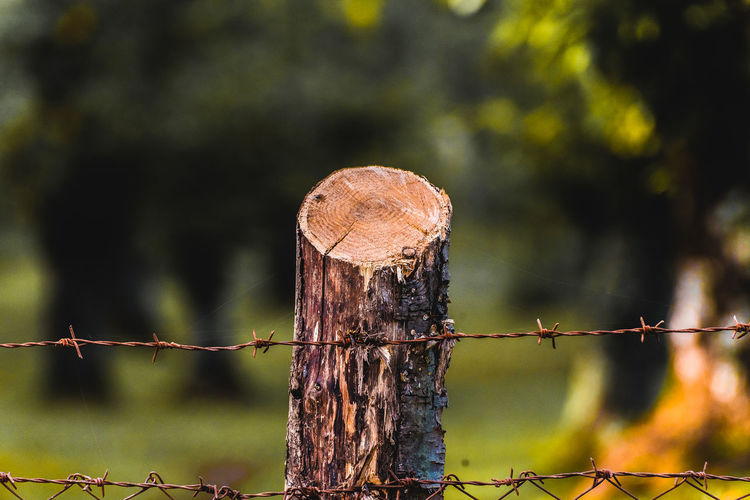 Close-up of barbed wire on wooden fence