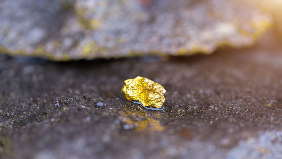Close-up of yellow leaf on rock