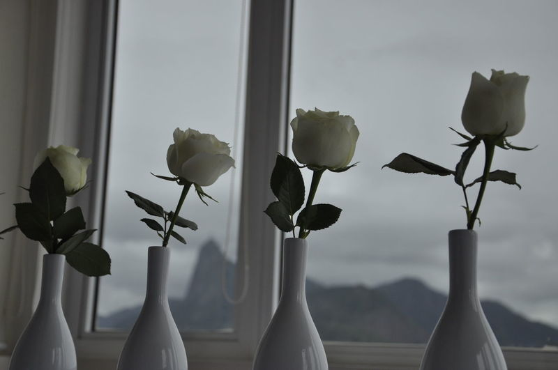 Close-up of flowers in vase against window
