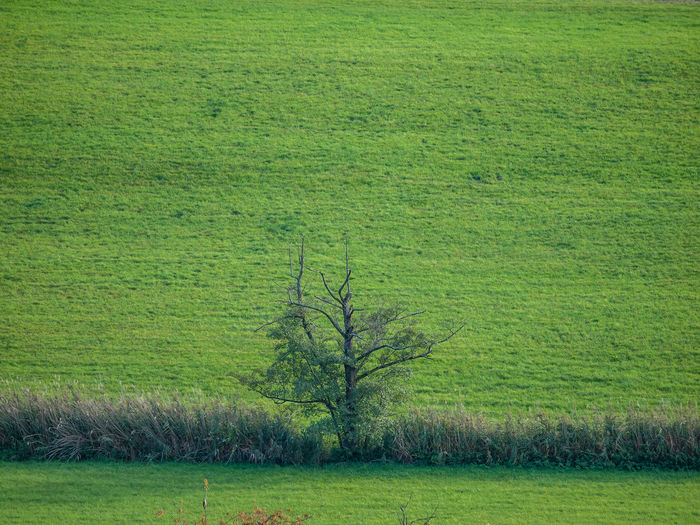Agricultural fields Agricultural Field Field Landscapes Farming Lanes Trees Dirt Road Industry Growth Lines Nature