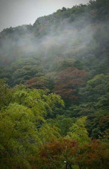 A foggy, rainy day in Hakone Japan... in early fall. Japan Hakone Landscape Landscape_Collection Late Afternoon The Places I've Been Today The Great Outdoors - 2015 EyeEm Awards The Traveler - 2015 EyeEm Awards The Explorer - 2014 EyeEm Awards Fall Colors Leaves Fall Beauty