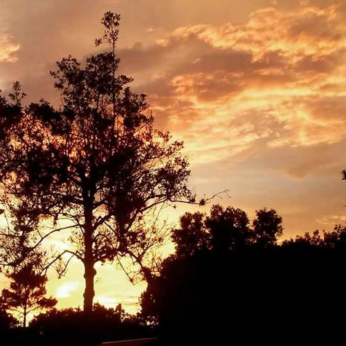 """seffner mango sunset"" Florida Floridasky Tampa Fl Tampa Bay TampaBayFlorida Sunset Sunset #sun #clouds #skylovers #sky #nature #beautifulinnature #naturalbeauty #photography #landscape Mother Nature Nature Photography Clouds And Sky Pinksky Peach Color Skyandtree Skyandtrees Seffner Tampasky Clouds Collection Naturelovers Nature Walk Adventure Time Naturebeauty Mothernature Skyscape"