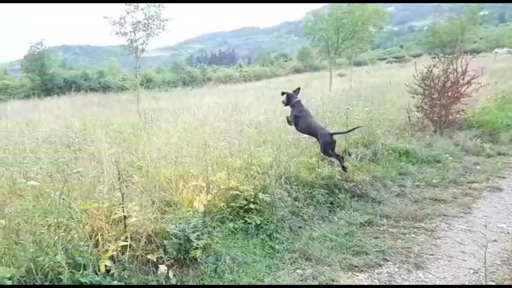 Pets Dog Nature Outdoors Field Grass Mammal Tree Rural Scene France