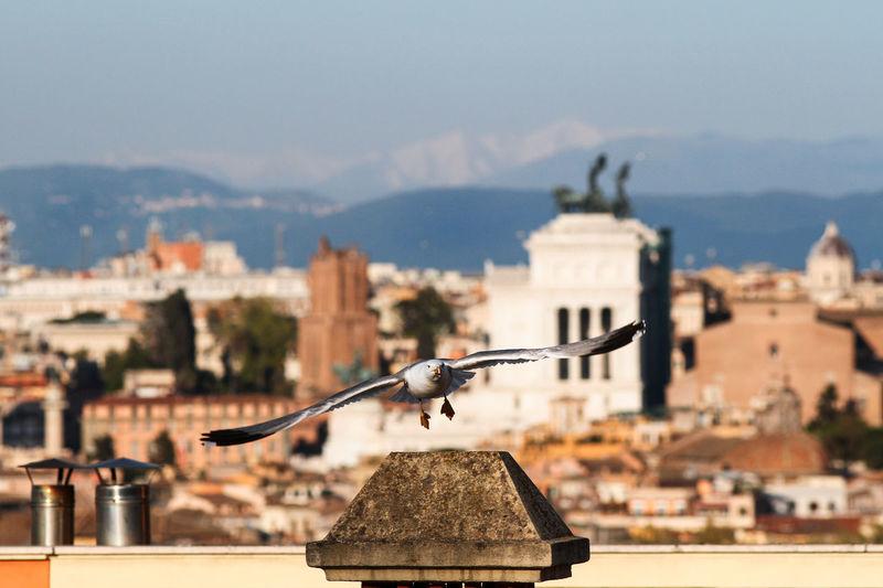 Panorama on the city of rome, altare della patria, roofs, churches.