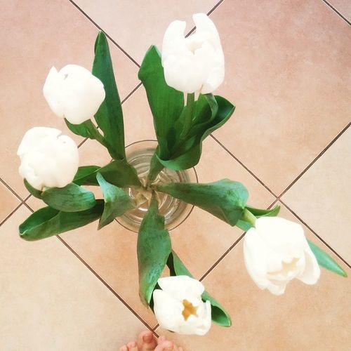 Morning and flowers💭👣 Morning Mood Flower Whitepassion Whiteflowers Whitetenderness Simplewhite Tulips Whitetulips Tenderness Legs Toes пальчики белыетюльпаны утроисолнце солнечноеутро Sunnymorning нежнаянежность нежность