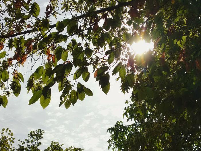 sunny Sunday,